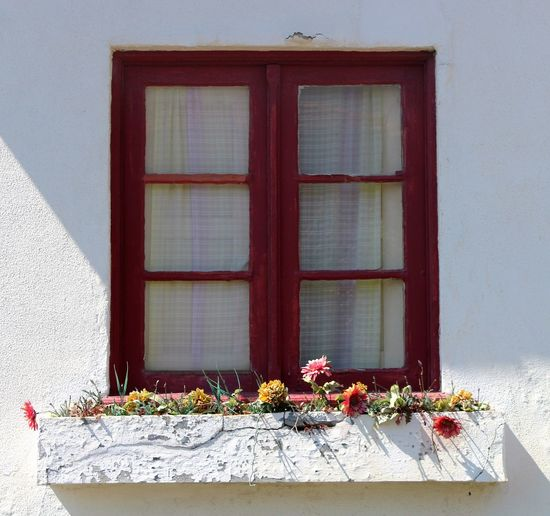 Day Flower Pot Flowers House Plant Red Streetphotography Window Window Sill