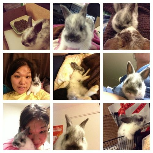 I will always love u 😘🐰 Bugs Bobby Netherlanddwarfrabbit Mrflirt Affectionate Mrkisses