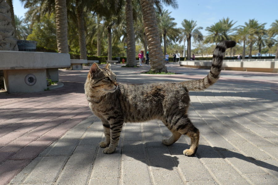 🐈 Street Cat Cats Pets Dog Tree Day Outdoors Mammal No People Cat♡ Animal Themes Domestic Animals Strong Cat EyeEmNewHere Tamer Gad
