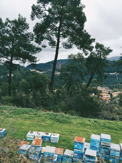 Apiary Beautiful Bee Bee Apiary Bee House Beehive Climate Change Earth Flora Forest Green Green Color Marmaris Mediation Nature Peace Scenics Spring Tracking Tranquility Travel Destinations Turkey Turkish Nature Walking Around Woods