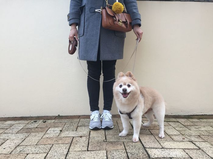 Portrait Of Dog Standing With Woman Against Wall