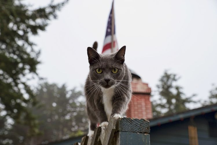 On the prowl... Alertness Animal Themes Cat Cat On Fence Cat On The Prowl Day Domestic Animals Domestic Cat Feline Feline Companions Feline Friend Feline Portraits Focus On Foreground Grey Cat Looking At Camera Mammal No People One Animal Pets Portrait Roof Sky Whisker Zoology