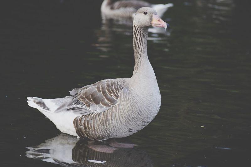 Bird Arnhem Nature Love
