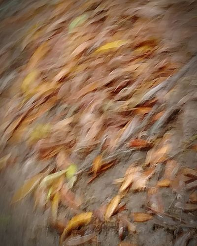 Blurred Effect Leaves_collection Aftertherains Photography In Motion