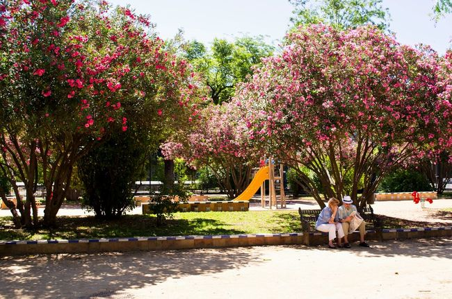 Sevilla SPAIN Enjoying Life Better Together Trees Relaxing Park Summer Piople Snapshots Of Life