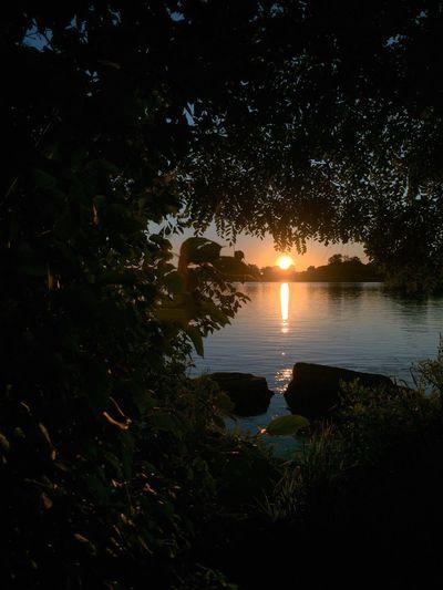 Framed sunrise Grosse Ile Sunrise Silhouette Framed Framedbynature Framed Shot Framed By Nature Framed By Trees