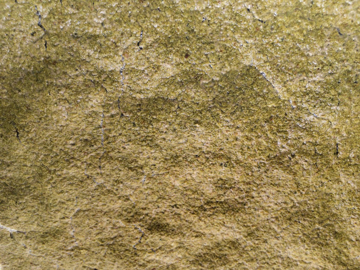 Top fermentation yeast for home beer brewing Beer Brew Brewing Beer Do It Yourself Food And Drink Backgrounds Brewery Brewing Close-up Drink Fermentation Home Brew Home Brewing No People Surface Level Textured Effect Yeast