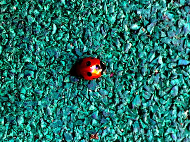 Complementary Colors Ladybug Bugs IPhoneography Colors Green Nature Showcase June