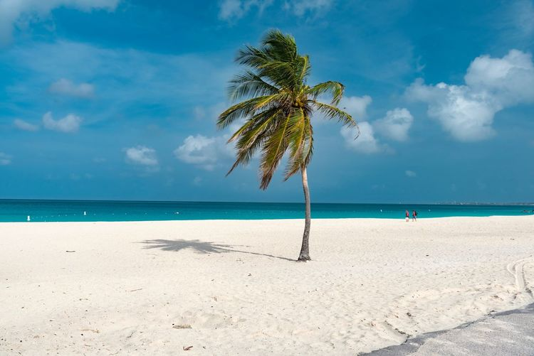 Calm Exotic Tranquil Beach Beauty In Nature Caribbean Cloud - Sky Day Horizon Over Water Idyllic Island Leisure Nature No People Outdoors Palm Tree Paradise Relax Resort Sand Scenics Sea Sky South America Summer Tranquil Scene Tranquility Tree Tropical Warm Water