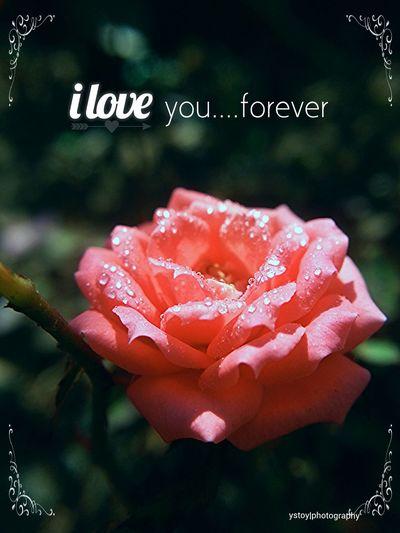 Love... Eyeem Philippines Check This Out EyeEm Best Shots EyeEm Flower