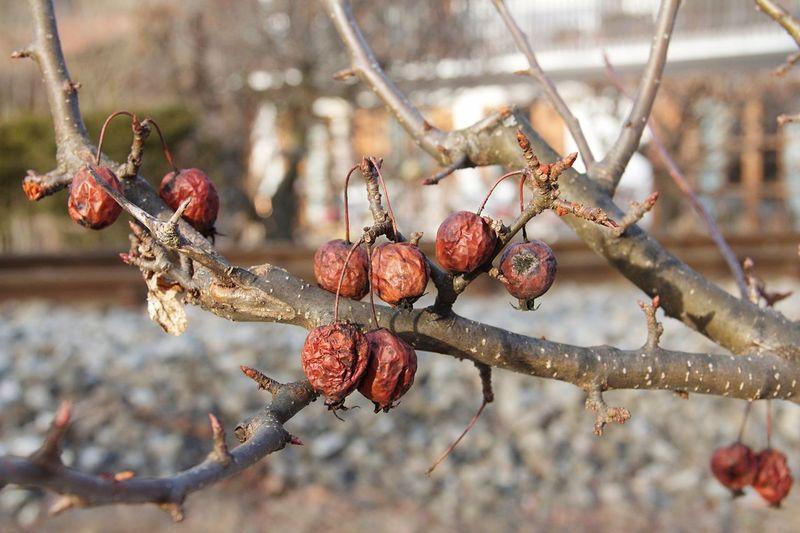 Dry Fruit Focus