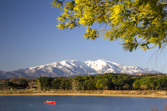 Canigou Mountain Beauty In Nature Blue Clear Sky Day Lake Mimosa Tree Mountain Mountain Range Nature No People Outdoors Scenics Sky Snow Tranquility Tree Water