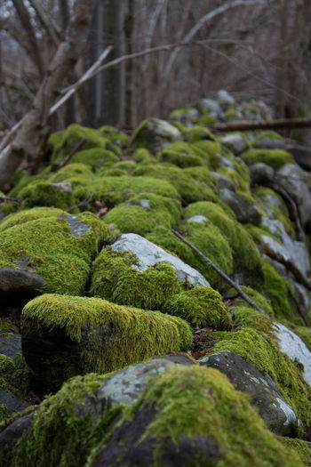 Plant Moss Green Color No People Tree Selective Focus Forest Growth Nature Land Day Beauty In Nature Rock Tranquility Solid Close-up Rock - Object Outdoors Covering Tranquil Scene WoodLand Stone Wall And Moss Stone Wall Swedish Nature