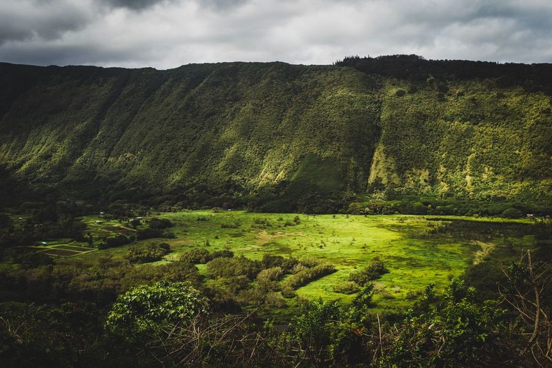 View Of Waipi'o Valley Leica M9 Summicron 35mm Waipio Valley  Pacific Island Valley Big Island Hawaii Plant Sky Cloud - Sky Green Color Growth Nature Beauty In Nature Landscape Field Environment Land Agriculture Tranquility