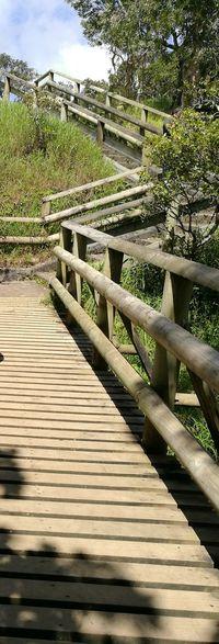 Health Track In The Woods Footbridge