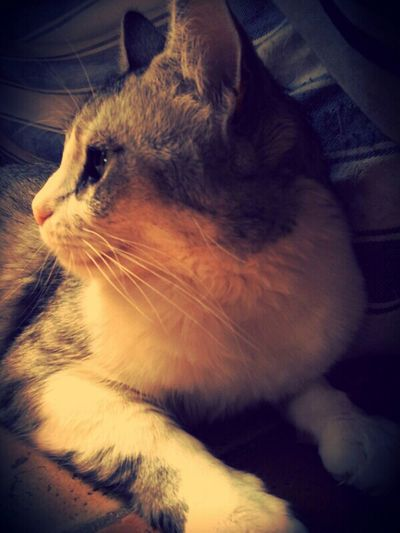 Cute Cats I Love My Pets Cats Of EyeEm Catsoftheworld Cute Pets Cat Lovers Intense Discussion