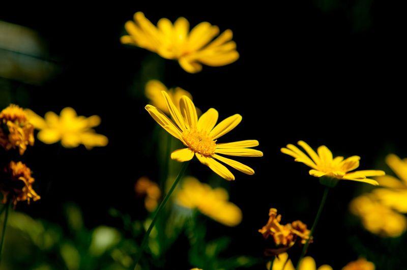 向陽花 Summer Flower