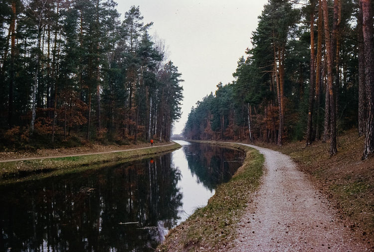 Canal amidst trees in forest against sky