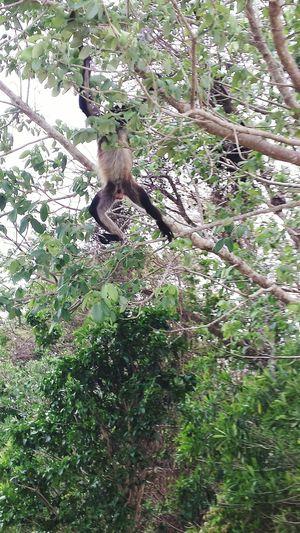 Hola soy Monky saludos a la banda!🙊😂 Mexico Y Su Naturaleza Monkey Maromas Paisaje Natural