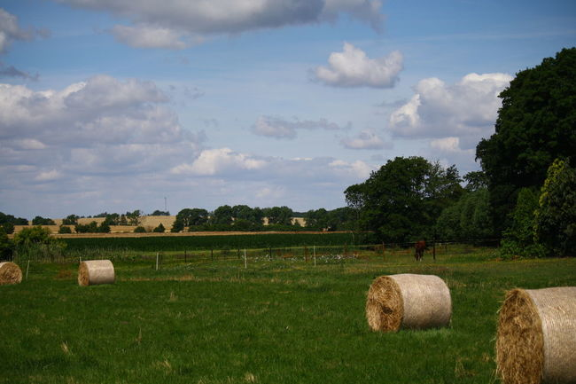 Agriculture Bale  Beauty In Nature Cloud Cloud - Sky Day Field Grass Grassy Green Color Growth Hay Landscape Nature No People Non-urban Scene Outdoors Remote Rolled Up Rural Scene Scenics Sky Tranquil Scene Tranquility Tree