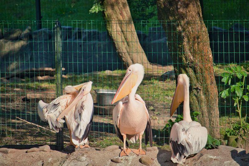 View of birds in zoo