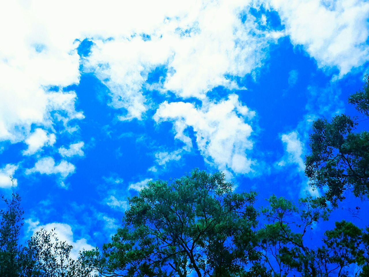 blue, low angle view, nature, sky, beauty in nature, tree, cloud - sky, day, tranquility, growth, scenics, outdoors, no people, forest