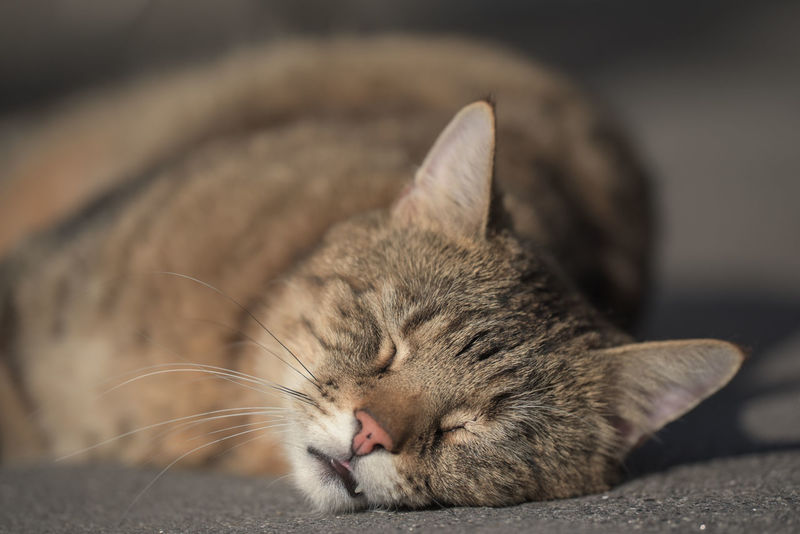 Cat Close-up Domestic Animals Domestic Cat Eyes Closed  Hauskatze Katze Lying Down No People One Animal Pets Relaxation Relaxing Sleeping Sleepy Whisker