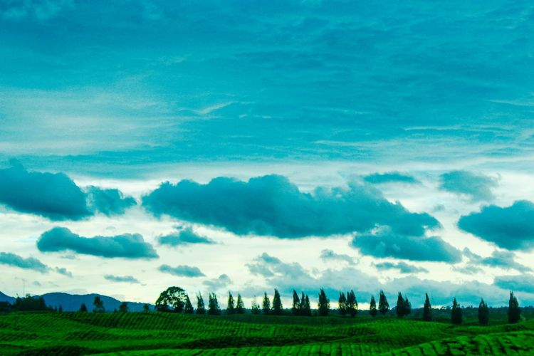 #landscape #landscpape #sunset #photography #beautifulinnature Agriculture Farm Cloud - Sky Field Landscape Rural Scene Outdoors Business Finance And Industry Day Blue Tree Beauty In Nature