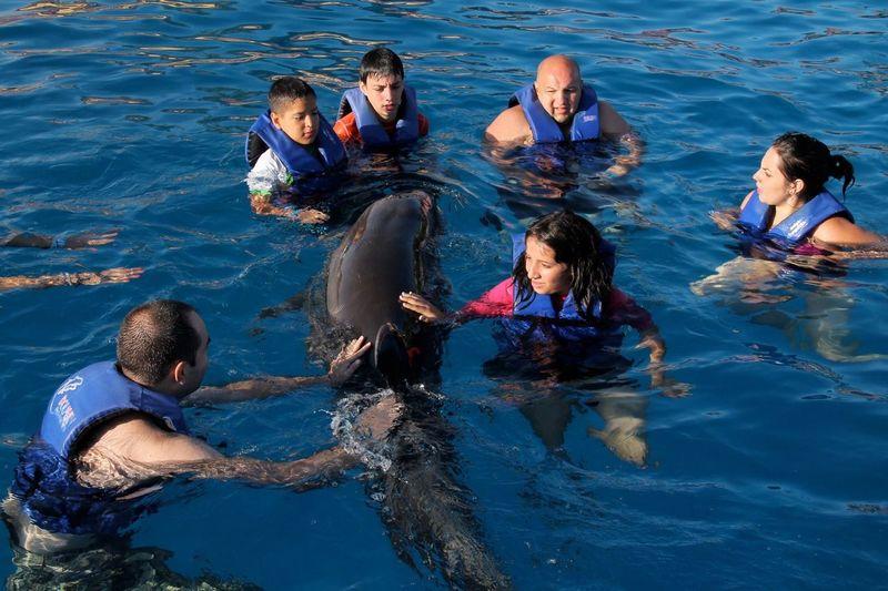 Dolphins :33 Super Fresh Fish Taking Photos Hello World Instagram @aldoestradaaxD