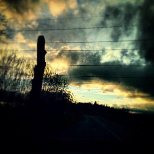 Bush Fence Trees Scotland Skies Aberdeenshire Messedupjournal Countryside Kas© Grass Scotland 💕