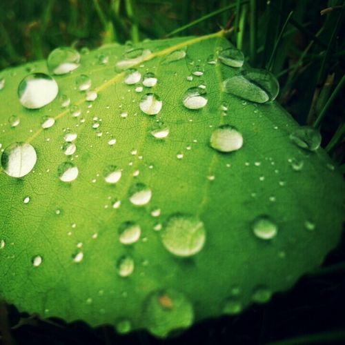 Water Drops Leaf Fliters
