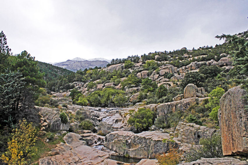 La Pedriza, Madrid, España Sky Plant Mountain Tree Nature Rock Beauty In Nature Landscape Rock - Object Tranquility Mountains Snowcapped Mountain Summit Summit With Snow Wildlife Peace Nature La Pedriza, Madrid, Spain Rocas Cumbre Cumbre Con Nieve Naturaleza Paisaje Sierra Libertad