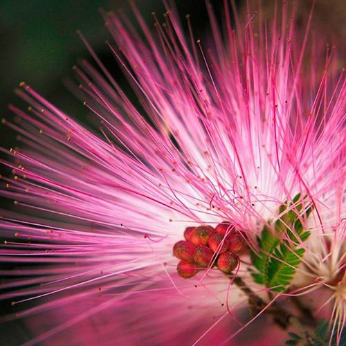 Venezuelaflowers Brasilflores Flowersofinstagram Nature_obsessed Naturelovers Usa_naturehippys Inata