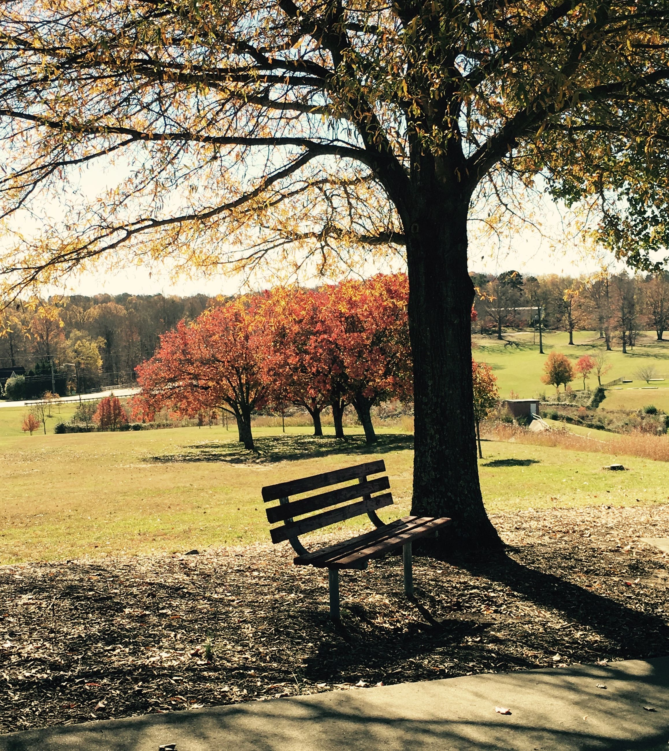 tree, bench, park - man made space, park, tranquility, branch, park bench, tranquil scene, nature, grass, empty, tree trunk, absence, scenics, growth, beauty in nature, sunlight, chair, relaxation, shadow