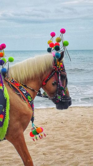Side view of a horse on the beach