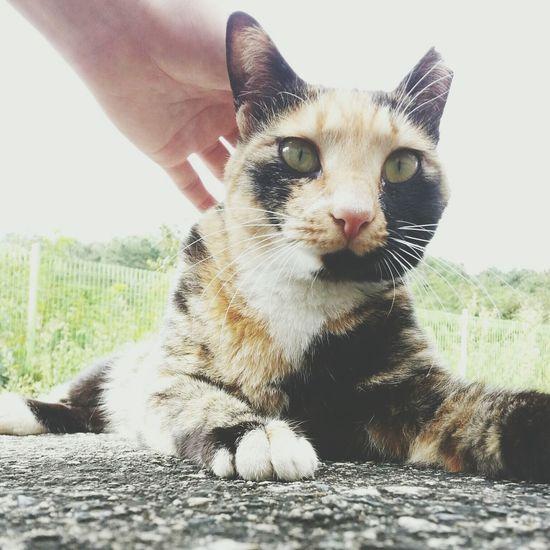 Cat Tnr Alley Cat Grooming ?.?