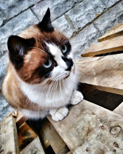 Domestic Cat Animal Themes Domestic Animals One Animal Whisker Cat Mammal High Angle View Alertness Animal Head  Day Focus On Foreground Kitten Looking Киев Ирпень Sky Animals In The Wild Feel The Journey