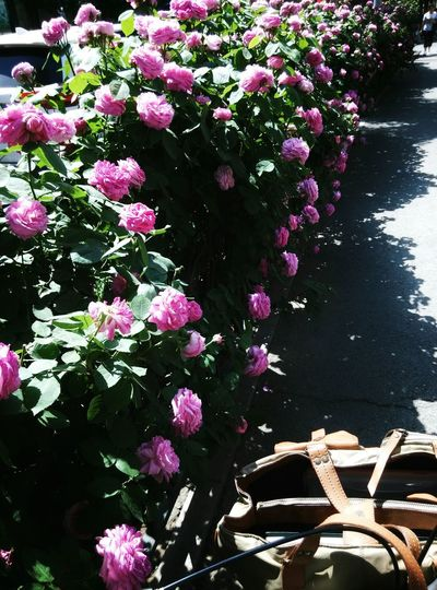 Nature Growth Outdoors Flower Beauty In Nature Day Art Is Everywhere Sreetphotographer