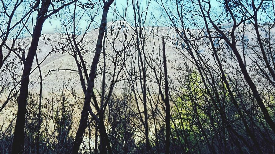 .A walk in the woods. Sorry mountains! Not Trees And Mountains But Only Trees First Eyeem Photo Badphoto Nature Dark Trees