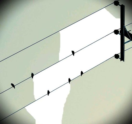Filter. Play. Create. New. Filter Edit Play With Light And Shadow Birds Freedom Contrast Picture Words Bird Telephone Line Flying Cable Flock Of Birds Silhouette Electricity  Power Line  Sky Animal Themes