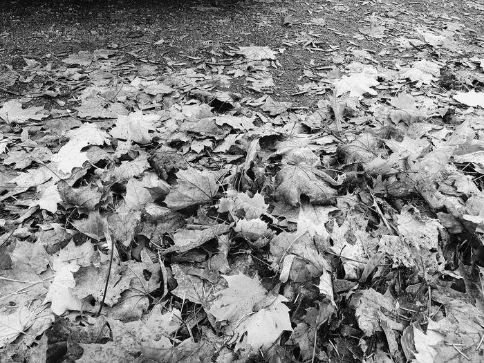 Herbst! First Eyeem Photo