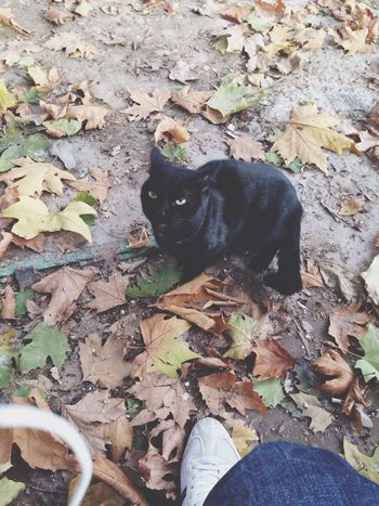 Cat Automne
