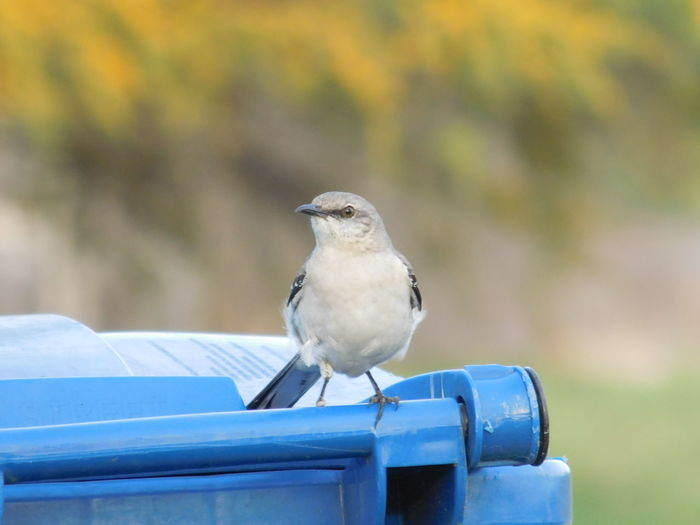 Close-up of bird perching on garbage bin