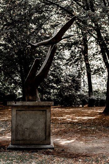 Old tree trunk in field