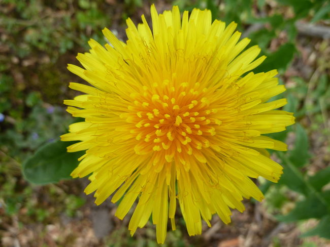Shiny Sunny Flower Beauty In Nature Blooming Close-up Flower Flower Head Focus On Foreground Freshness Nature No People Outdoors Plant Yellow