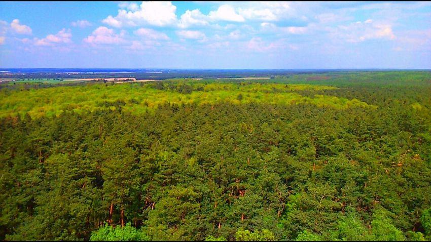 Poland Trees Sun