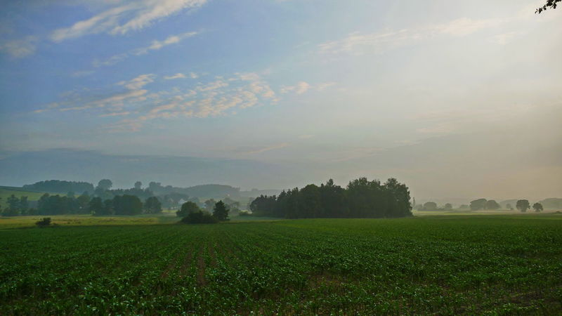 fantastic way to work Bavarian Landscape Agriculture Beauty In Nature Cloud - Sky Environment Field Foggy Grass Green Color Growth Land Landscape Morning Fog Nature No People Non-urban Scene Outdoors Plant Plantation Rural Scene Scenics - Nature Sky Tranquil Scene Tree