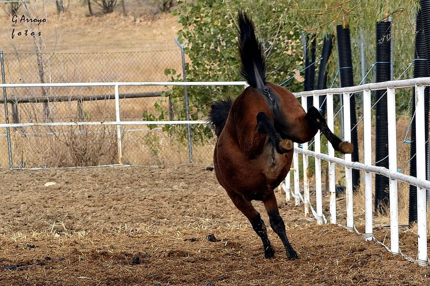 Animal Themes Outdoors Domestic Animals No People Horse Caballo Potro Coz One Animal Day Field Spain♥ Color Photography Nikon D5500 October 2016 Eyeemphotography EyeEm Gallery EyeEm Young Animal