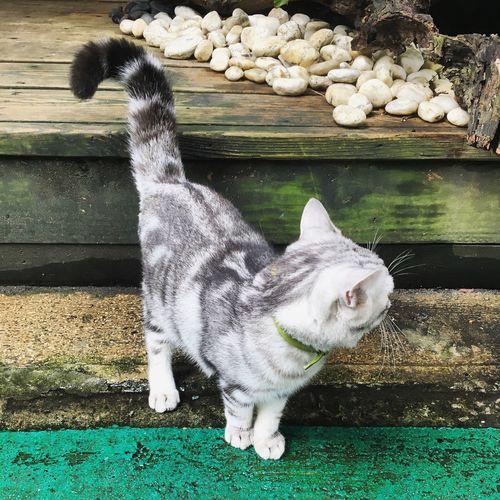 hi Cat First Eyeem Photo