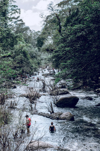 Tree Plant Forest Nature Day Beauty In Nature Group Of People Flowing Water Outdoors